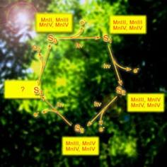 Цикл превращений группы атомов марганца (иллюстрация с сайта lbl.gov).