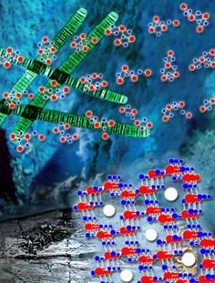 На дне океана находят полезные ископаемые, содержащие комплексы марганца и кислорода, напоминающие OEC. Возможно, древние бактерии на первых порах использовали подобные соединения для облегчения фотосинтеза (иллюстрация с сайта lbl.gov).